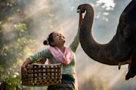 A woman makes friends with an elephant in Myanmar. [Photo: SWNS]