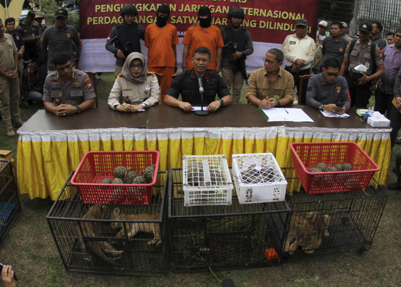 Riau Police Chief Maj. Gen. Agung Setya, center, speaks to the media as smuggled animals, including lion and leopard cubs are displayed during a press conference in Kampar, Riau, Indonesia, Sunday, Dec. 15, 2019.  Indonesian police said Sunday that they have arrested two men suspected being part of a ring that poaches and trades in endangered animals and seized from them lion and leopard cubs and dozens of turtle, police said Sunday. (AP Photo/Rifka Majjid)
