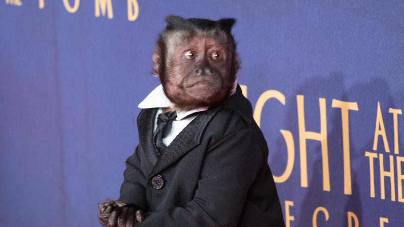"""Crystal The Monkey attends the """"Night At The Museum: Secret of the Tomb"""" premiere on December 11, 2014. (Photo by Mark Sagliocco/FilmMagic)"""