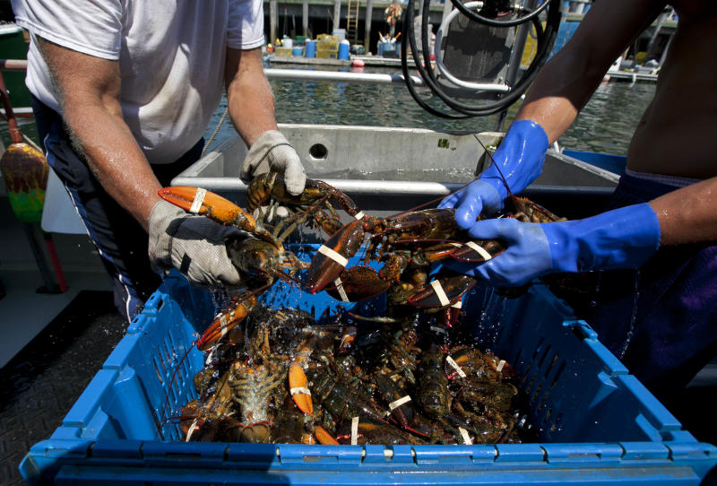 Lobsters are unloaded from a fishing boat Thursday, Aug. 9, 2012, in Portland, Maine. Maine's lobster harvest seems to be hitting an economic wall, with a plentiful catch causing low prices that is disgruntling lobstermen in Canada. They have set up blockades around some plants to prevent delivery of Maine lobster they say is stealing their livelihood. (AP Photo/Robert F. Bukaty)