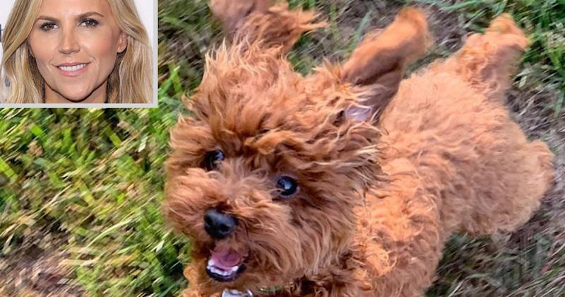 Tory Burch's Dog Chicken Home Safe After Going Missing in New York City: 'You Are Our Heroes'