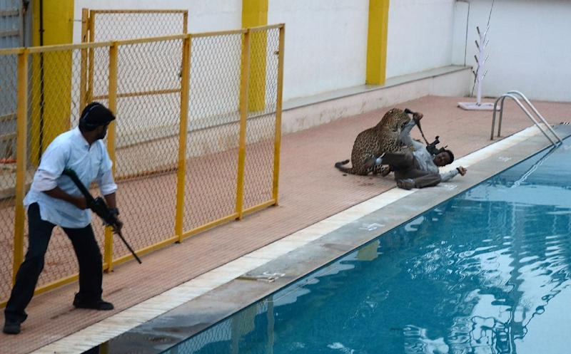 A leopard attacks a man identified by Indian media as wildlife conservationist Sanjay Gubbi at a private school on the outskirts of Bangalore (AFP Photo/STR)
