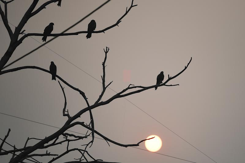 Birds rest on the branches of a tree during sunrise in New Delhi on Oct. 28, 2019. (Photo: Sajjad Hussain/AFP via Getty Images)