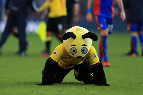 Harry the Hornet's behaviour is increasingly waspish