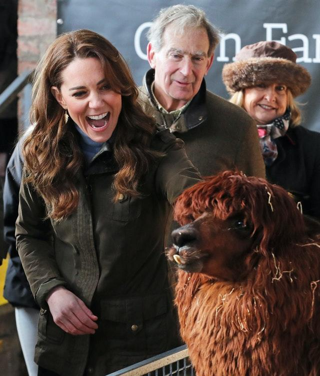 The Duchess of Cambridge stroking an alpaca during a visit in Northern Ireland