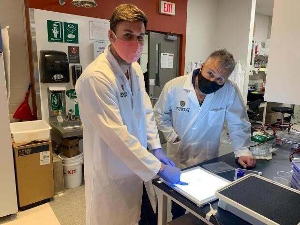 U of C researchers experimenting with growing fish cells in a lab