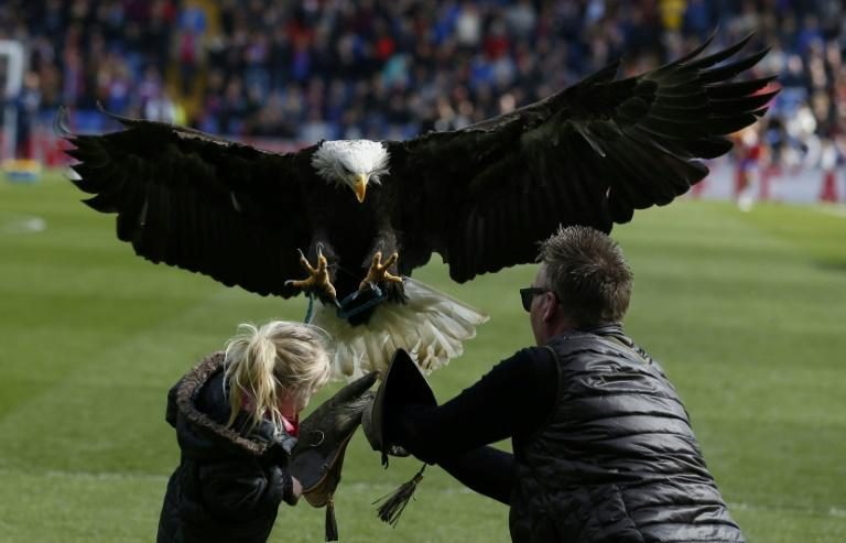 A young supporter helps the Eagle handler with Crystal Palace's bald eagle mascot Kayla before kick off at Selhurst Park in south London on April 15, 2017