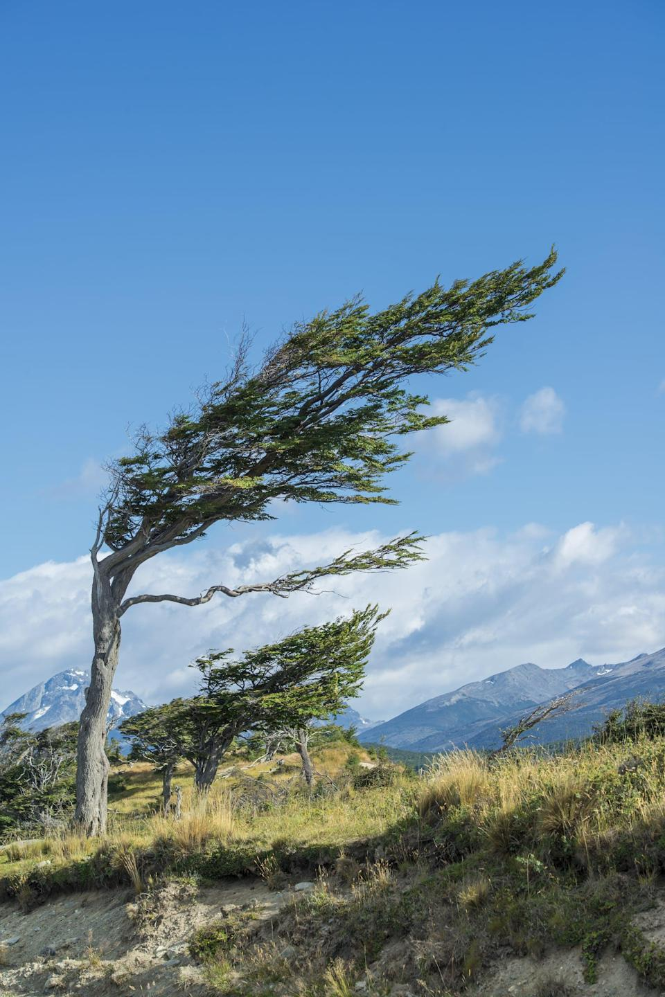 <p>An archipelago off the south of South America, Tierra del Fuego has plenty of natural wonders for tourists to gawk at, including glaciers, forests, and mountains. Some of the island's trees grow horizontally because of the strong gusts of wind from the Antarctic, and they are a sight to see. </p>
