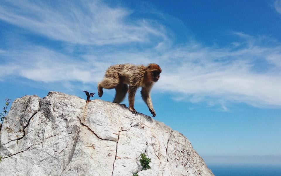 One of Gibraltar's most famous residents - Getty