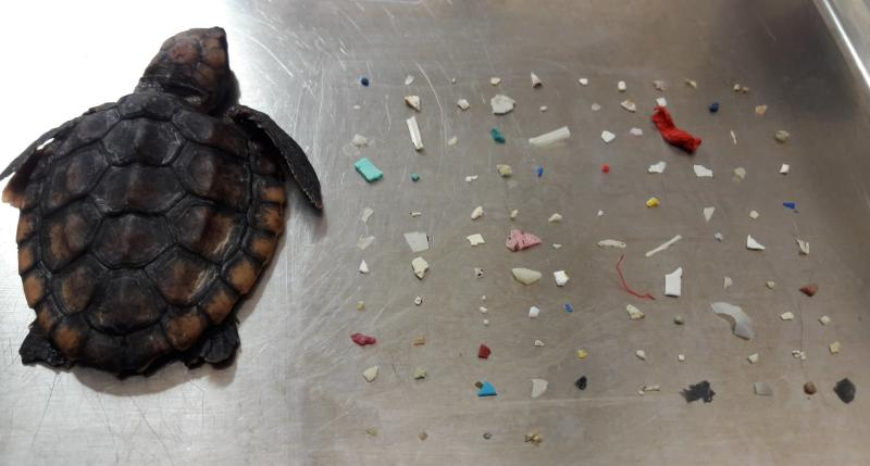 Florida Nature Center Posts Troubling Photo of Dead Baby Sea Turtle Next to the Plastics That Killed Him