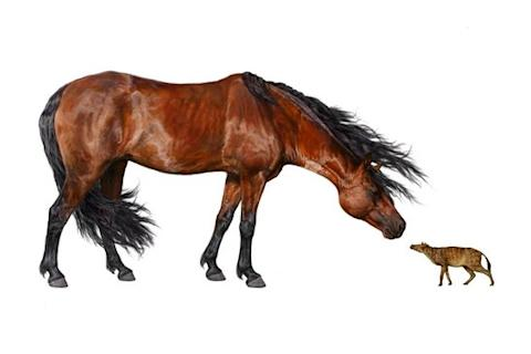 Shrinking Horses Due To Climate Change