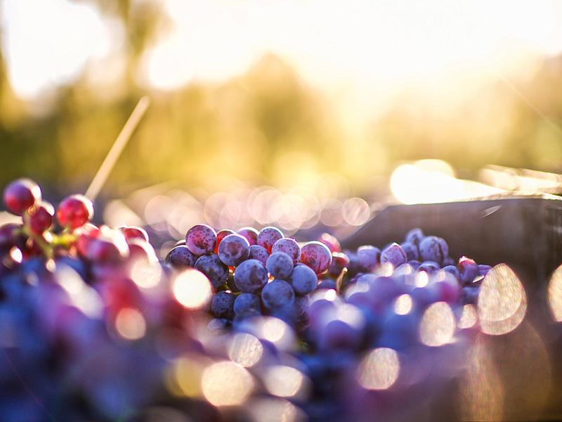 Organic wine is made without pesticides and chemicals (iStock)