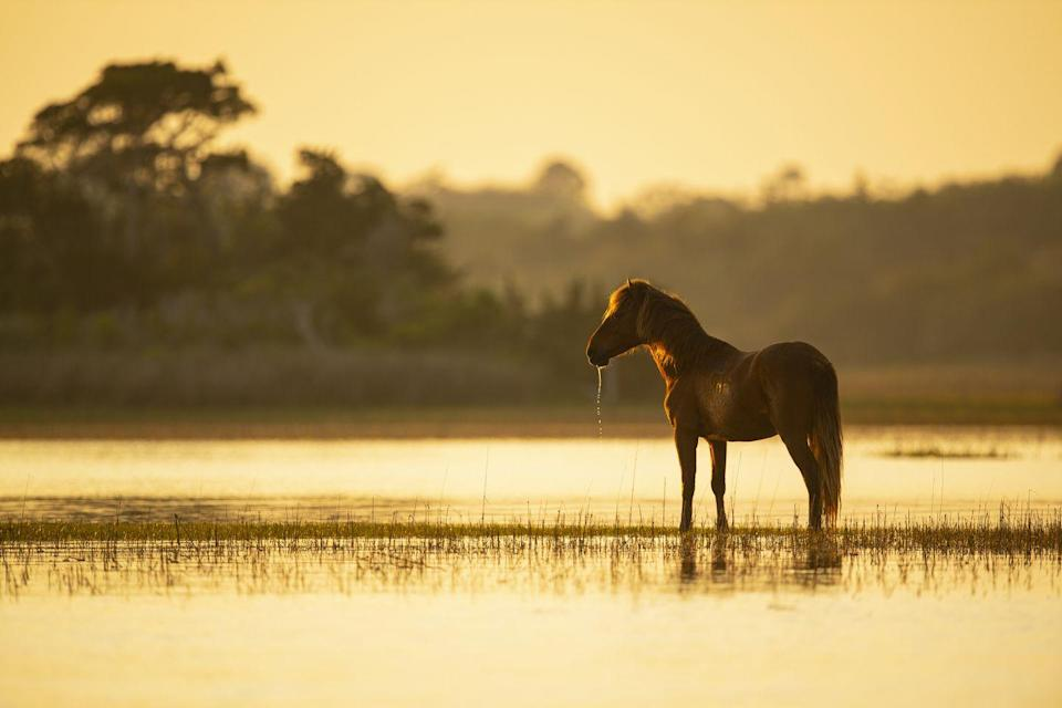 "<p>There are few things more romantic than wild horses, and Beaufort can give you a close-up view of them. See them from a stand-up paddleboard, or simply take in the gorgeous Victorian architecture in this cool, quaint town.</p><p><a class=""link rapid-noclick-resp"" href=""https://go.redirectingat.com?id=74968X1596630&url=https%3A%2F%2Fwww.tripadvisor.com%2FTourism-g48947-Beaufort_North_Carolina-Vacations.html&sref=https%3A%2F%2Fwww.redbookmag.com%2Flife%2Fg35212951%2Fromantic-weekend-getaways%2F"" rel=""nofollow noopener"" target=""_blank"" data-ylk=""slk:PLAN YOUR TRIP"">PLAN YOUR TRIP</a></p>"