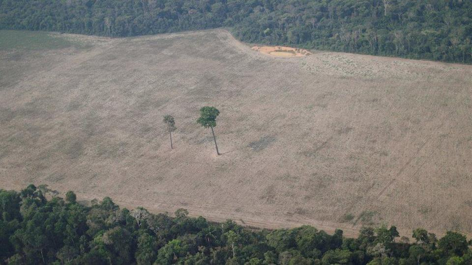 An aerial view shows a tree at the centre of a deforested plot of the Amazon near Porto Velho in Brazil on 14 August 2020