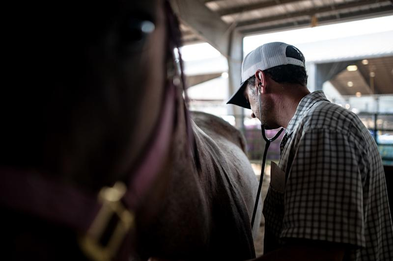 Dr. Nick Moore, of Georgetown, Texas, checks up on a horse at Ford Park. (Joseph Rushmore for HuffPost)
