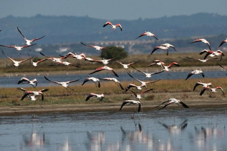 Agios Mamas is one of Europe's Natura 2000 wildlife diversity regions, and is home to nearly 60 different bird species