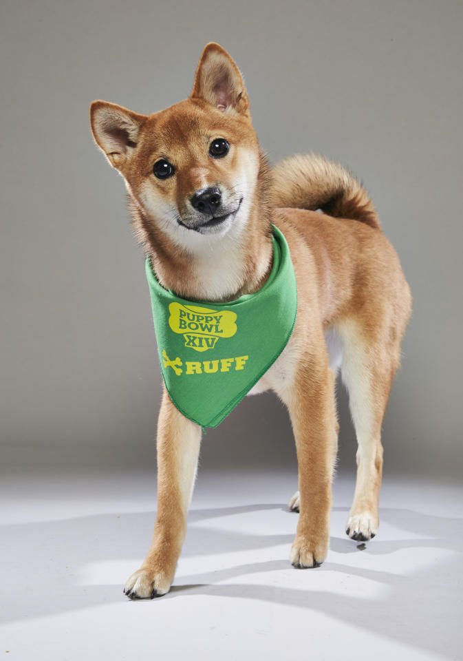 Team: Ruff<br /> From: AHeinz57 Pet Rescue<br /> (Photo: Animal Planet)
