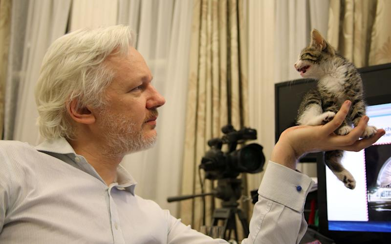 WikiLeaks founder Julian Assange with a new companion in Ecuador's embassy in London