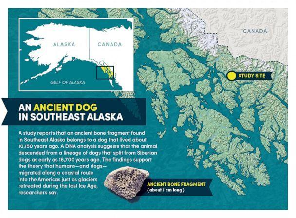 PHOTO: A map shows the location where a dog bone dated to be from 10,150 years ago was found. (Bob Wilder/University at Buffalo)