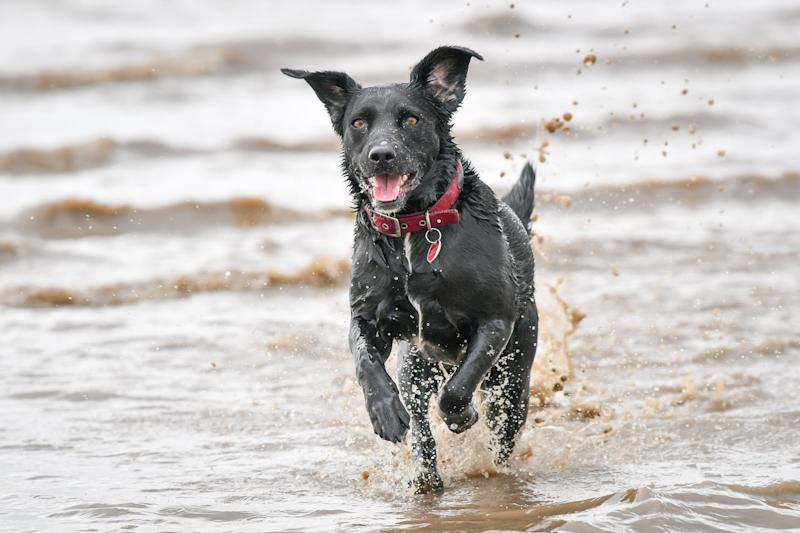 <p>Dog and cat owners are being advised to speak to a vet as soon as possible if they want to take their pet on holiday after March next year. </p>