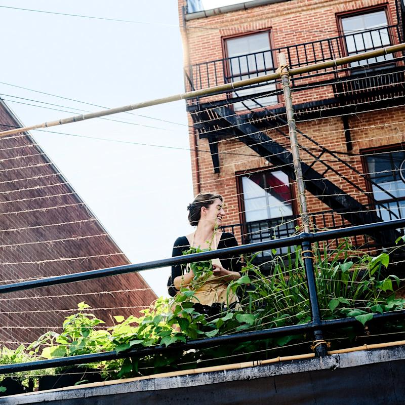 An employee gathers herbs from the shared rooftop garden.