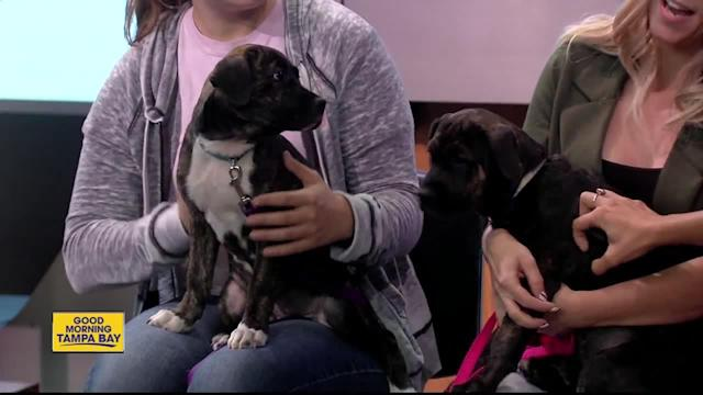 Camden and Shea, two 13-week-old puppies, are named for famous baseball parks. Now you can give these female pups homes for the holiday.