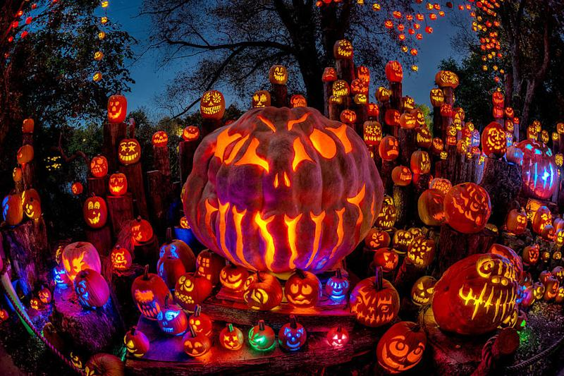 Close up of large carved pumpkin surrounded by smaller carved pumpkins with different colored lights inside