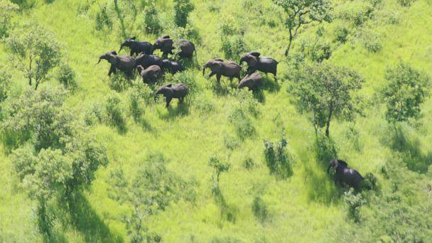 PHOTO: Elephants in the Niassa Reserve in Mozambique. (WCS Mozambique)