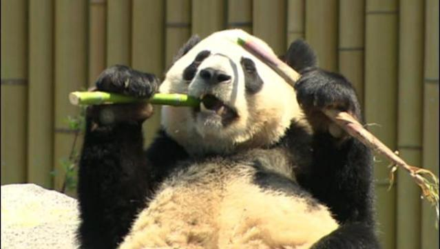 The newest residents of the Toronto Zoo chow down
