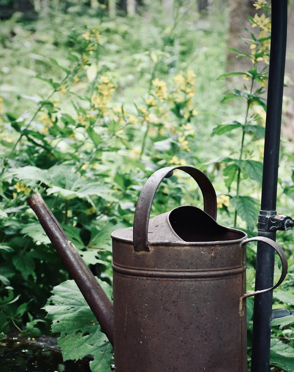 Garden trends: metal watering can