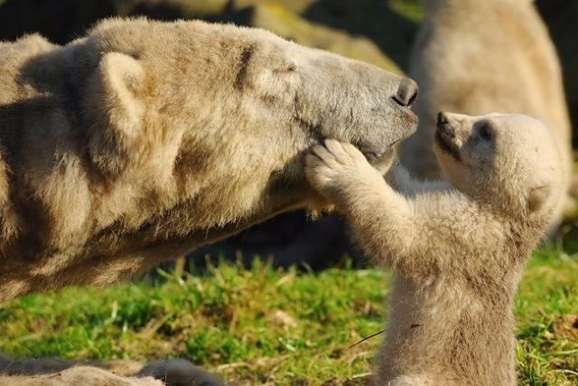What Kind of a Animal Mother Are You?