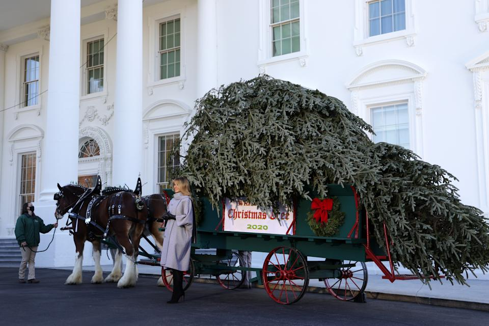 <p>Melania Trump poses with this year's Christmas tree</p>Getty Images