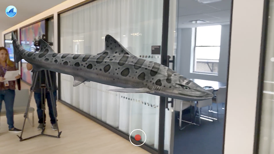 It's just a tiger shark swimming through the Yahoo office. No biggie.