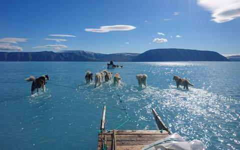Sled dogs wading through standing water on the sea ice during an expedition in North Western Greenland - Credit: STEFFEN OLSEN/AFP