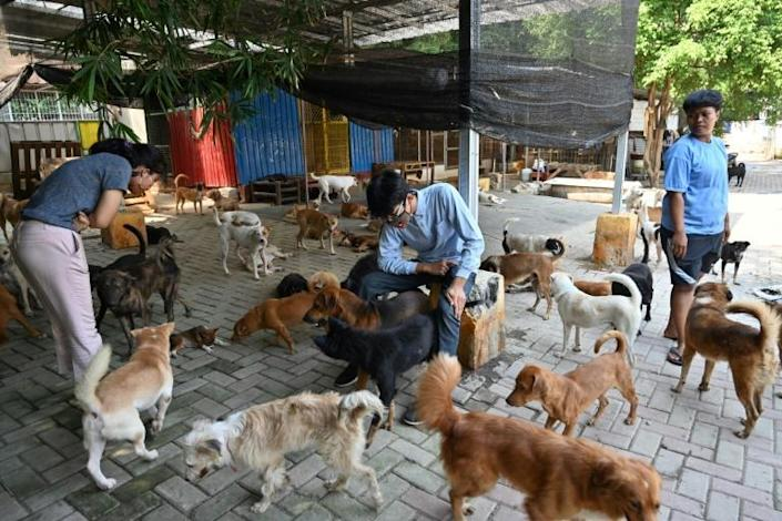 Somali's sprawling Jakarta rescue complex is home to about 1,400 dogs (AFP Photo/ADEK BERRY)