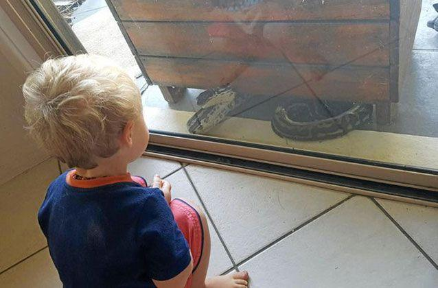 A Nambour woman barricaded herself and her two-year-old inside when she spotted a two-metre python outside. Picture: Megan Manly