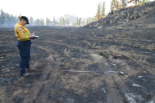 Nova Scotia fire investigator Kara McCurdy documents information about tire-track widths at the site of one of the fires near Okanagan Falls, B.C.  (Submitted by Kara McCurdy - image credit)