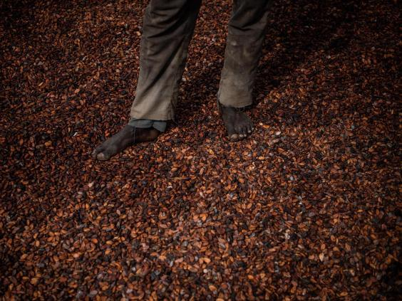A worker stands on dried cocoa beans outside an Ivory Coast cooperative facility. About two-thirds of the world's cocoa supply comes from west Africa