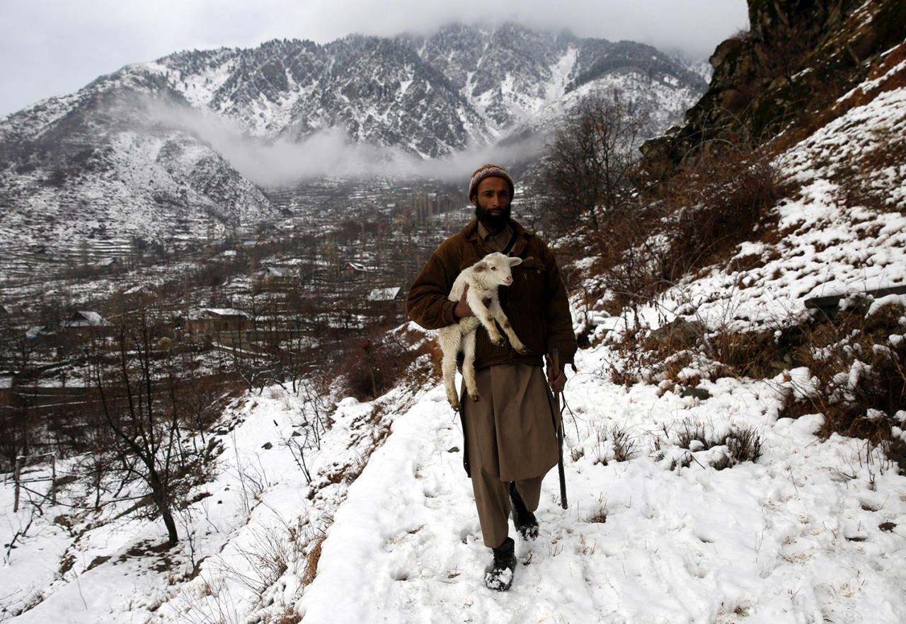 <p>A shepherd carries a lamb as he walks on a snow-covered mountain ridge, on the outskirts of Srinagar, the summer capital of Indian Kashmir, Jan. 5, 2017. (Photo: FAROOQ KHAN/EPA) </p>