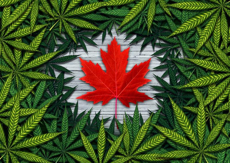 Red Canadian maple leaf surrounded by marijuana leaves