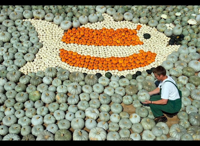 An employee arranges pumpkins to form a fish at the pumkin exhibition of the asparagus and experience farm Buschmann and Winkelmann in Klaistow near Beelitz, northeastern Germany on August 31, 2011. The exhibition will start on September 1 , 2011, with over 100,000 pumkins in 400 different varieties.