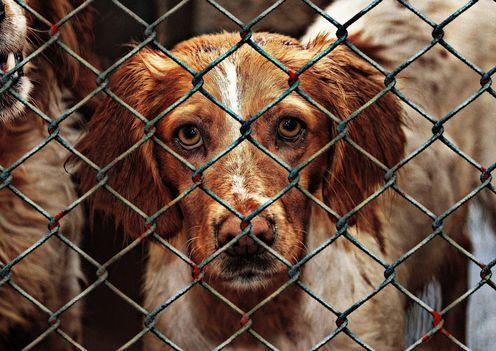 "<span class=""caption"">Adopt a dog - irresponsible breeders will create more dogs that will suffer from lack care in their early months.</span> <span class=""attribution""><a class=""link rapid-noclick-resp"" href=""https://pixabay.com/en/animal-welfare-dog-imprisoned-1116205/"" rel=""nofollow noopener"" target=""_blank"" data-ylk=""slk:AlexasFotos"">AlexasFotos</a></span>"