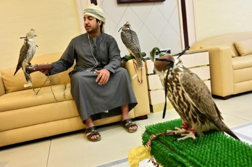 Falconry is a treasured tradition in the United Arab Emirates