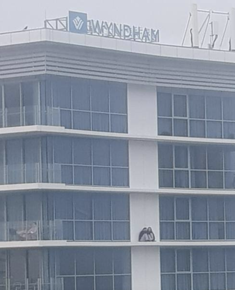 The duo were spotted on a ledge of the 14th floor on Sunday morning. Source: 7News