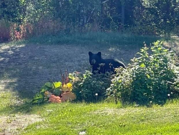 A bear reported Tuesday to be in the Tin Can Hill area of Yellowknife has been killed. (Ken Smith/Facebook - image credit)