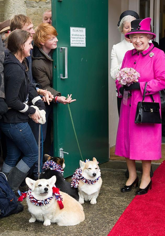 She pretends to feed her corgis under the table. Photo: Getty Images