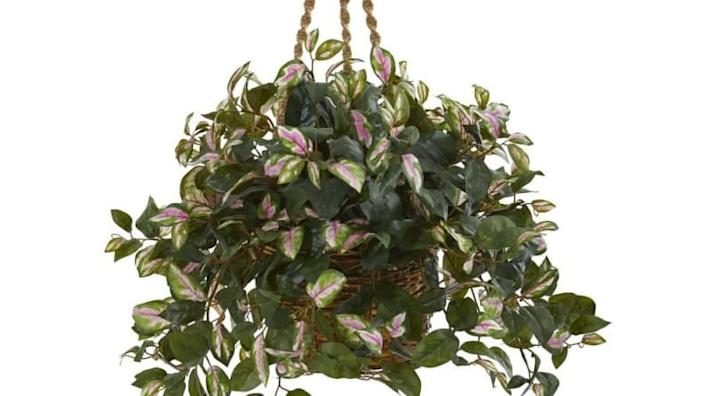 My Aunt Linda's hanging plants can't hold a candle to this one.