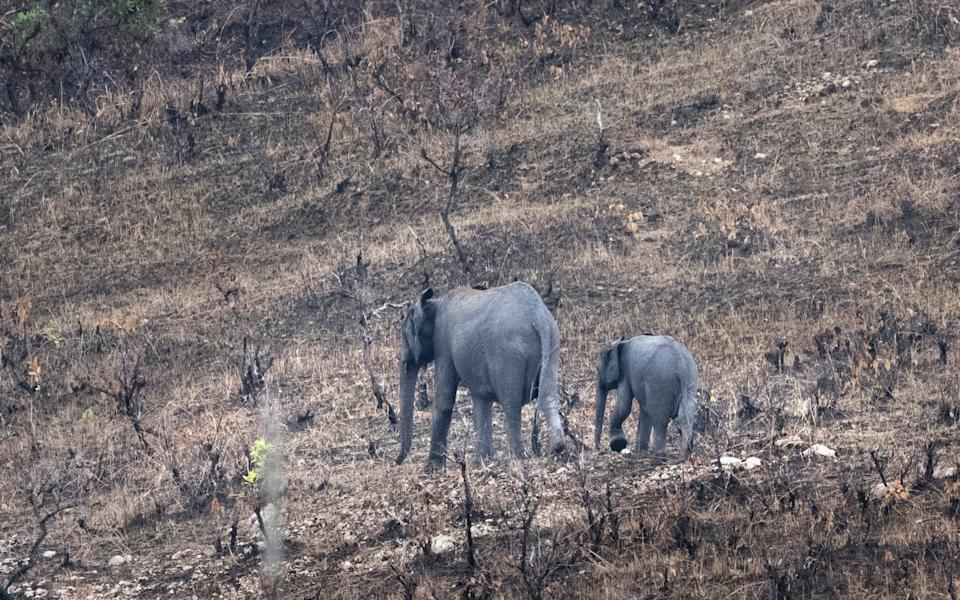 The basin is a haven for wildlife, including 60 per cent of the continent's forest elephants - David Rose