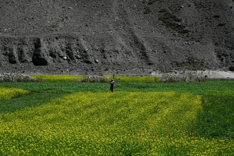 The Panjshir Valley is mostly deserted after the Taliban took control of the last province resisting their rule (AFP/WAKIL KOHSAR)