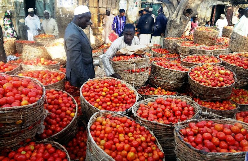 Tomato prices in Nigeria have been steadily climbing for months